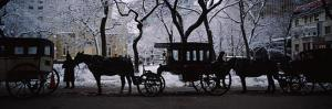Horse Drawn Carriage Picture Image